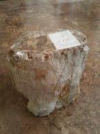 פטרופייד ווד - גזע עץ מאובן גדול 50% הנחה